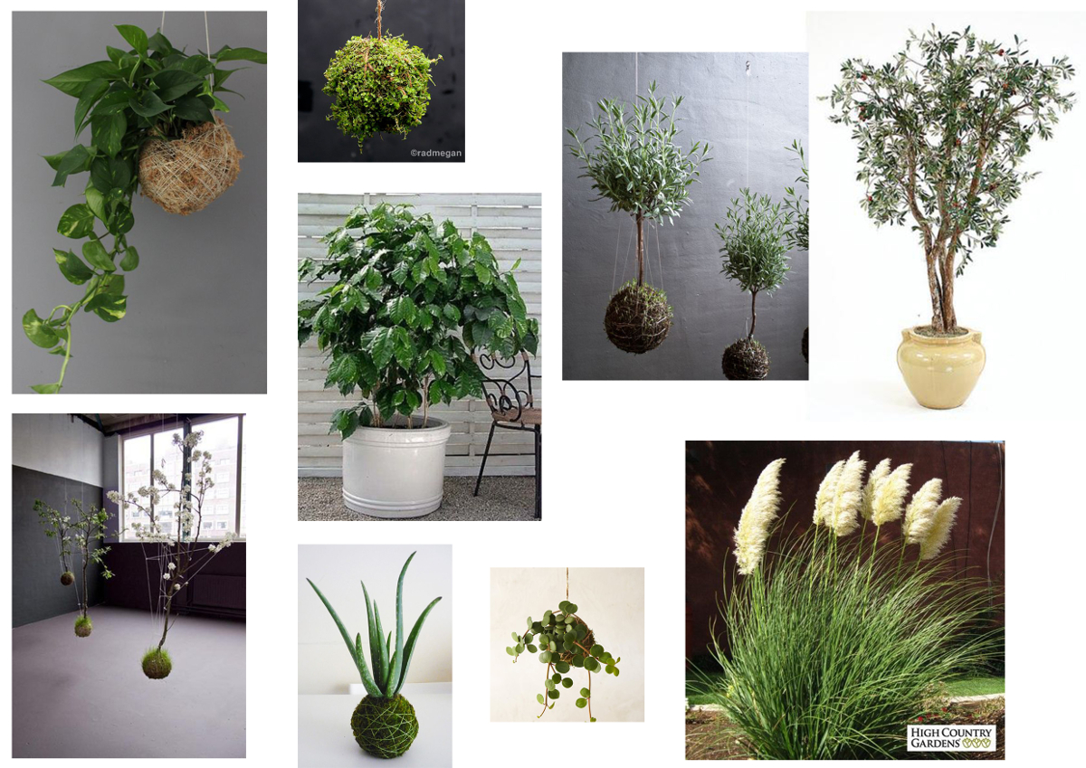 rośliny inspiracje_KrTr_2017